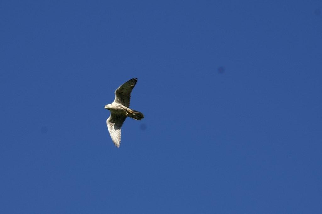 birds 118